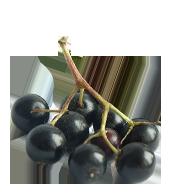 Elder Berry Juice Powder